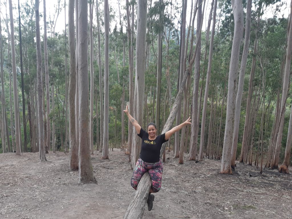 Bosque Eucaliptos Niteroi Trilhando Montanhas